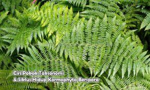 Ciri Pokok Taksonomi & Siklus Hidup Kormophyta Berspora