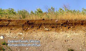 Lapisan Tanah, Tekstur, Komposisi Dan Profilnya