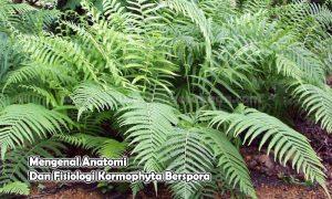 Mengenal Anatomi Dan Fisiologi Kormophyta Berspora