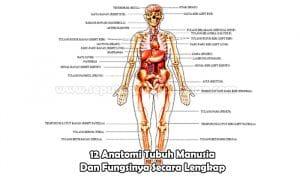 12 Anatomi Tubuh Manusia Dan Fungsinya Secara Lengkap