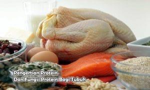 Pengertian Protein Dan Fungsi Protein Bagi Tubuh