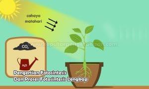 Pengertian Fotosintesis Dan Proses Fotosintesis Lengkap