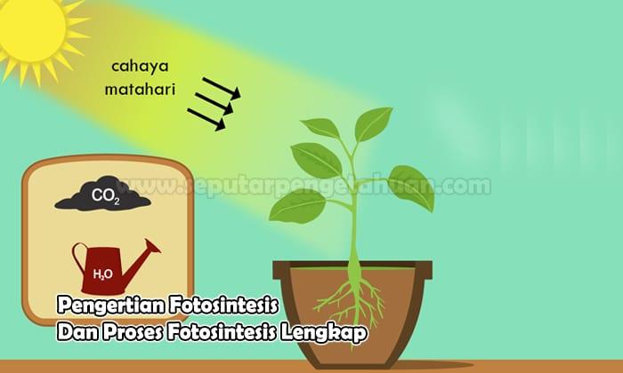 Pengertian Fotosintesis Dan Prosesnya Pembahasan Terlengkap
