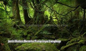 Jenis Hutan Beserta Fungsinya Lengkap