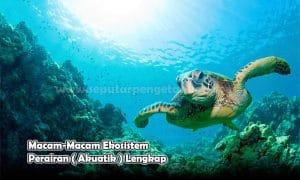 Macam-Macam Ekosistem Perairan ( Akuatik ) Lengkap