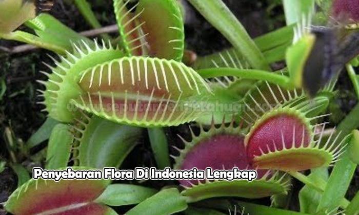 Penyebaran Flora Di Indonesia Pembahasan Lengkap