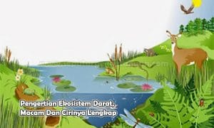 Pengertian Ekosistem Darat, Macam Dan Cirinya Lengkap