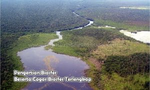 Pengertian Biosfer Beserta Cagar Biosfer Terlengkap