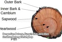 Pengertian Batang, Fungsi, Sifat, Jenis Dan Struktur Batang Terlengkap