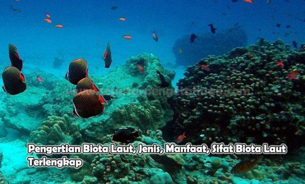 Pengertian Biota Laut, Jenis, Manfaat, Sifat Biota Laut