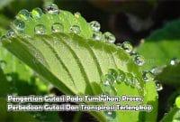 Pengertian Gutasi Pada Tumbuhan, Proses, Perbedaan Gutasi Dan Transpirasi