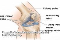 Pengertian Tulang Rawan, Fungsi, Jenis, Ciri, Proses