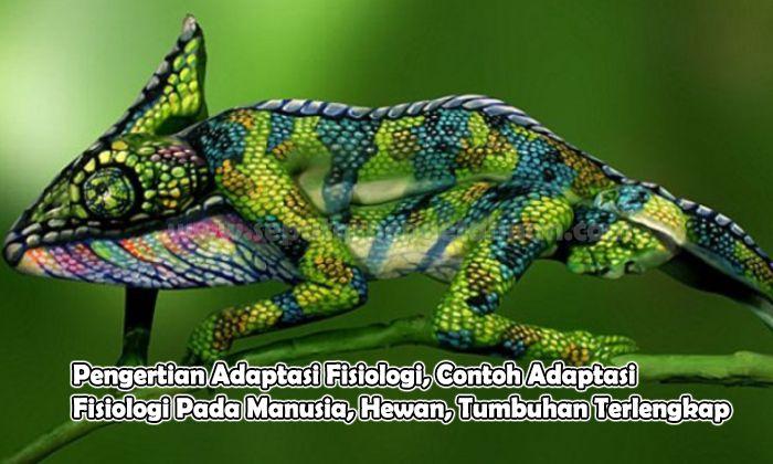 Pengertian Adaptasi Fisiologi, Contoh Adaptasi Fisiologi Pada Manusia, Hewan, Tumbuhan