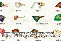 Pengertian Adaptasi Morfologi, Contoh Adaptasi Morfologi Pada Manusia, Hewan, Tumbuhan