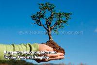 Pengertian Reboisasi, Manfaat, Tujuan, Fungsi