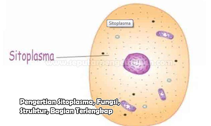 Pengertian Sitoplasma, Fungsi, Struktur, Bagian
