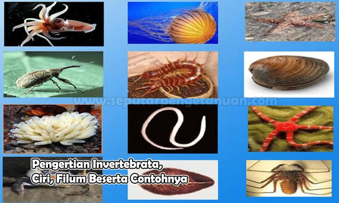 Pengertian Invertebrata Ciri Filum Beserta Contohnya